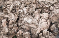 Country dirt rut after rain Royalty Free Stock Photo