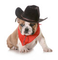 Country dog Royalty Free Stock Image
