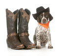 Country dog german shorthaired pointer wearing western hat sitting beside western boots isolated on white background weeks old Stock Image