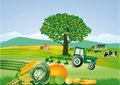 Country farm and harvest cheerful illustration of a with a tractor vegetables dairy cows an agriculture theme Stock Images