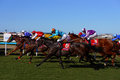 Country horse Race Royalty Free Stock Photo