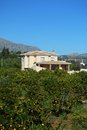 Country house and orange trees, Andalusia, Spain. Royalty Free Stock Photography