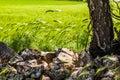 Country idyll Royalty Free Stock Photo