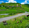 Country landscape in davberi samegrelo zemo svaneti georgia Royalty Free Stock Photo