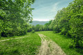 Country landscape, dirt road in the forest glade, sunny summer day