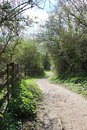 Country lane at Brandon Marsh Royalty Free Stock Photo