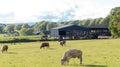 Country life - farm field Royalty Free Stock Photo