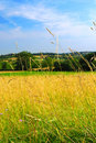 Country meadow landscape Stock Image