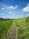 Country path ubud bali indonesia through the long grass in the countryside around in Stock Photography