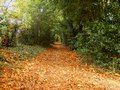 A Country Pathway Royalty Free Stock Photo