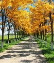 Country road with autumn trees Royalty Free Stock Photos