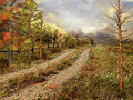 Country road in autumnal forest Stock Photos