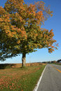 Country road brilliance farm with changing fall color Royalty Free Stock Photo