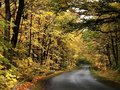 Country road crossing autumnal forest Stock Image