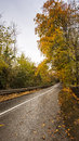 Country road at the fall empty surrounded with autumn colored trees Stock Photos
