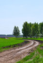 Country road through fields and meadows Stock Photography