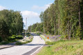 Country road in finland pines birches and lupins along a Royalty Free Stock Image