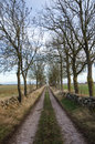 Country road lined by trees Royalty Free Stock Photo