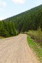 Country road through a lush green wide dirt passing pine tree mountain forest Stock Image