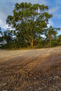 Country road with mud tracks in eucalyptus mountain forest, Blue Royalty Free Stock Photo