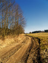 Country road or path landscape with blue sky and trees Stock Photos