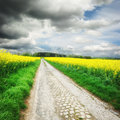 Country road with rapeseed field Royalty Free Stock Photo