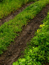 Country road rut narrow overgrown with grass Royalty Free Stock Image