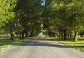 Country road with tree canopy a green Stock Image