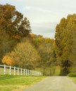 Country road with trees turning during fall Stock Images