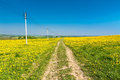 Country road. Yellow dandelions (taraxacum) in the meadow. Royalty Free Stock Photo