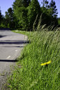 Country roadside one beautiful summer day Royalty Free Stock Photos