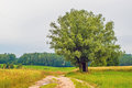 Country sandy road with tree Royalty Free Stock Photo