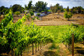 Countryside and Grape Vines, Temecula, California Royalty Free Stock Photo