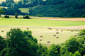 Countryside growing rural landscape in france Royalty Free Stock Photo