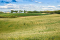 Countryside landscape with barley and potato fields and farm yar Royalty Free Stock Photo