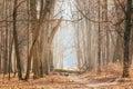 Countryside Road Lane Path Walkway Through Oak Autumn Forest Royalty Free Stock Photo