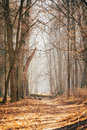 Countryside Road Lane Path Walkway Through Oak Autumn Forest Wit Royalty Free Stock Photo