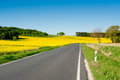 Countryside road rapeseed field alongside under blue sky Royalty Free Stock Photo