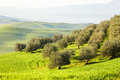 Countryside san quirico d orcia tuscany italy Royalty Free Stock Images