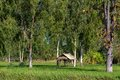 Countryside small hut in the rice paddy and eucalyptus trees Stock Images