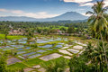 Countryside in sumatra rice fields Royalty Free Stock Photos