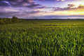 Countryside tranquillity a wheatfield at sunset in the very close to halberstadt Stock Photography