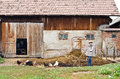 Countryside yard rustic barn and with chickens and a scarecrow Stock Photography