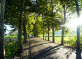 County secondary road with trees on both sides providing shade gradefes road leon spain Royalty Free Stock Photos
