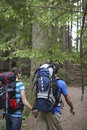 Couple with backpacks walking in forest rear view of a young holding hands and Stock Photos