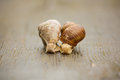 Couple of Burgundy snail