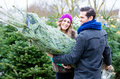 Couple selecting Christmas tree