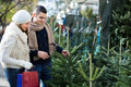 Pittsboro, NC- Couple Buying Christmas Tree