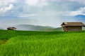 Couple cottage on Green Terraced Rice Field in Pa bong Pieng Royalty Free Stock Photo