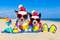 Couple of dogs on christmas summer vacation Royalty Free Stock Photo